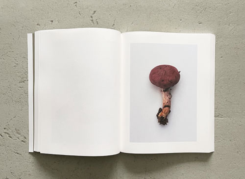 Takashi Homma: Symphony その森の子供 mushrooms from the forest