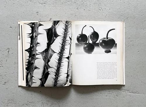 Nature as Designer: A Botanical Art Study