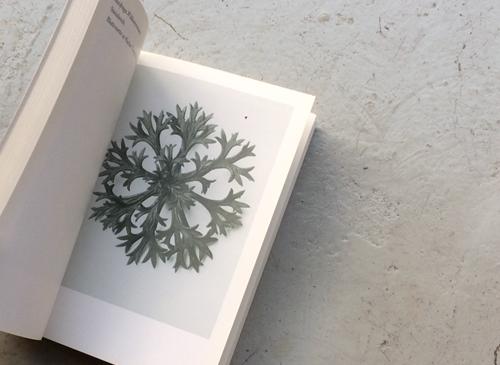 Karl Blossfeldt: Urformen der Kunst カール・ブロスフェルト