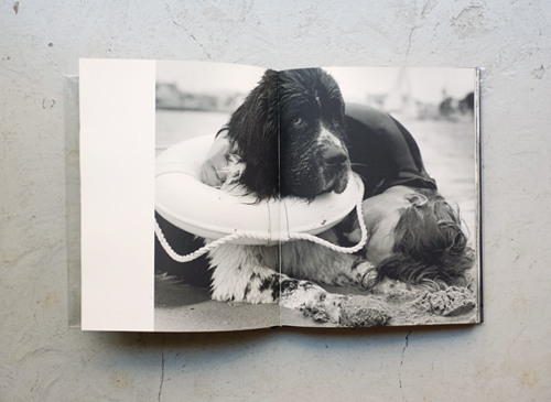 Bruce Weber: Gentle Giants: A Book of Newfoundlands