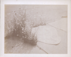 Mark Borthwick  Polaroid B  [Signed]