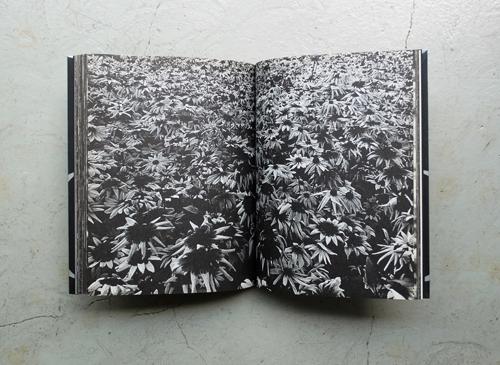 Daido Moriyama: Reflection and Refraction